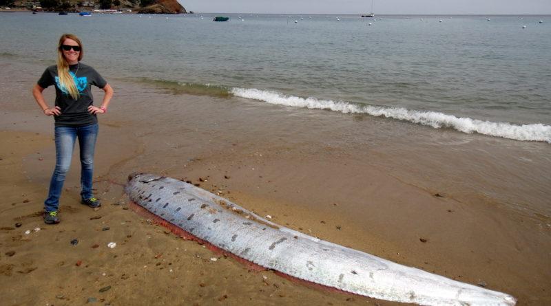 Giant oarfish found on Catalina Island