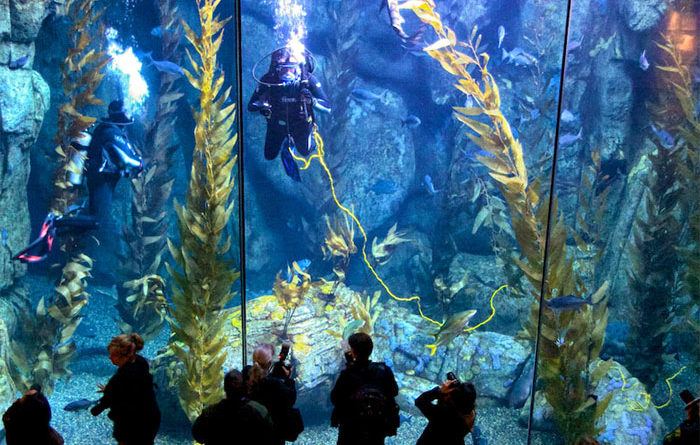 Free Aquarium of the Pacific Tickets at the Show