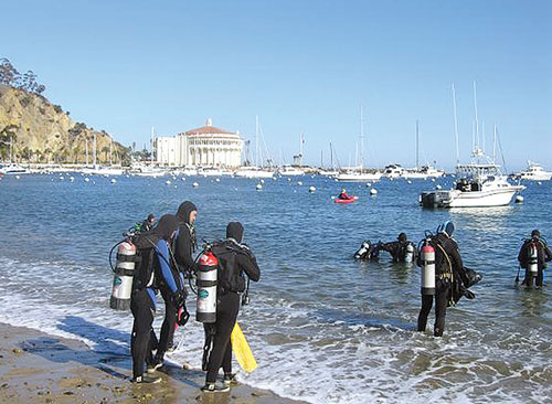 Registration for Avalon Harbor Underwater Cleanup Begins