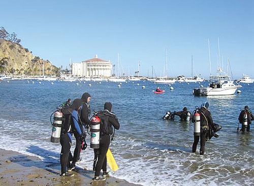 Registration for Avalon Harbor Underwater Cleanup Begins