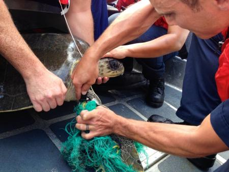 Coast Guard crew saves turtle from fishing line
