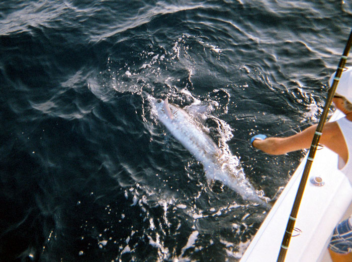 One Week Left to Enter Cabo/Hatteras/Viking Challenge Tournament, Aug. 16-18