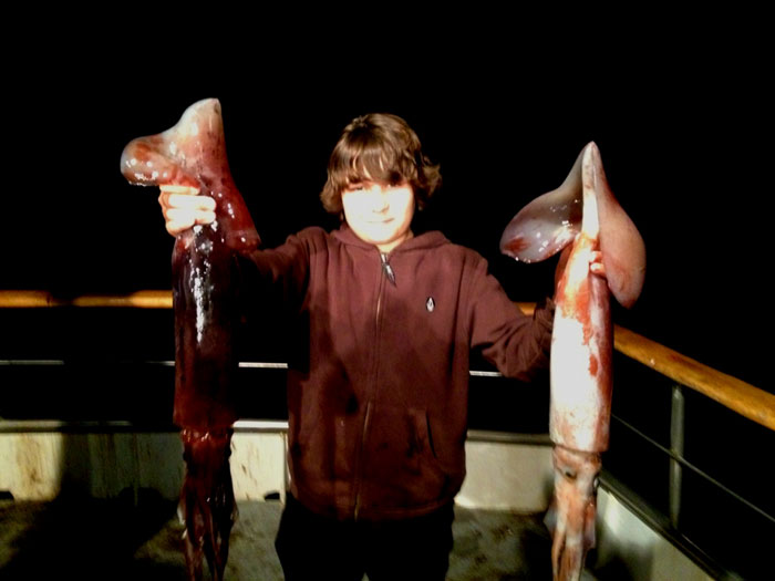 Jumbo Humboldt Squid Swarm in SoCal Waters