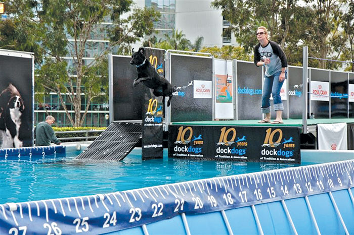 Dock Dogs Bring High-Flying Action to Show