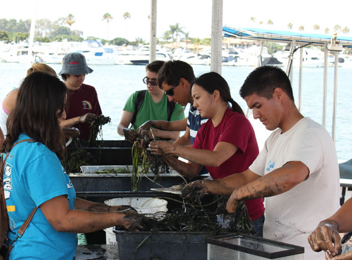 Four-year Program Aims to Increase Eelgrass