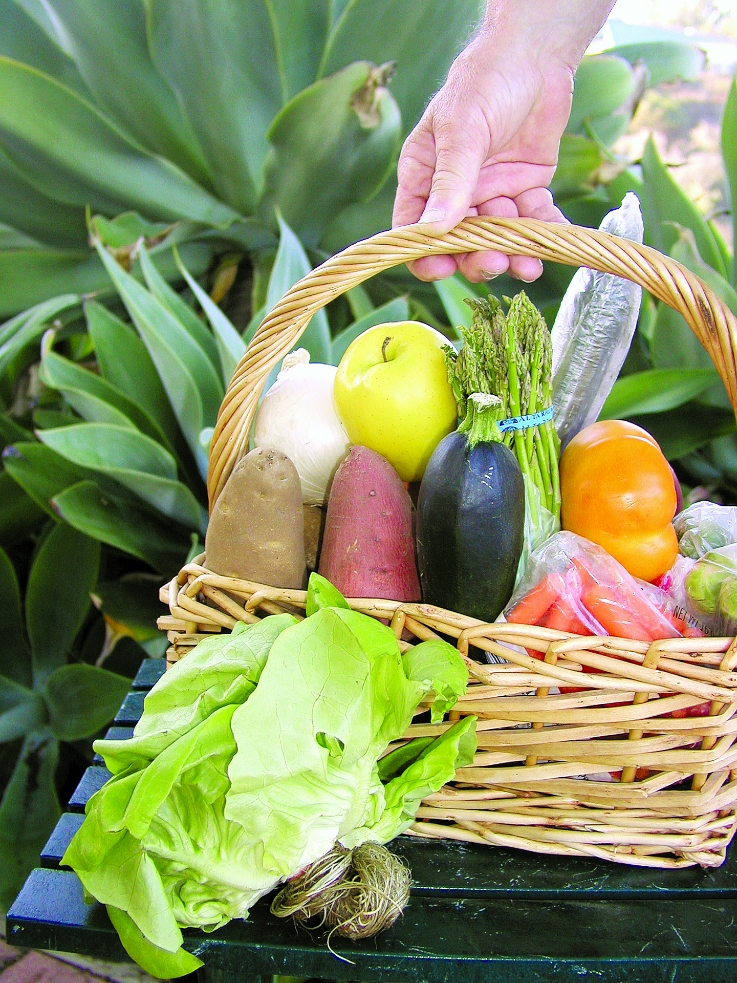 Los Cabos Organic Farmers' Market Opens for Cruising Season