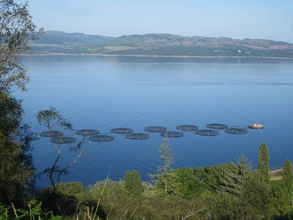 Fish Farm planned off San Diego coast