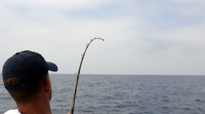 NOAA Offers to Pay Sport Anglers NOT to Fish