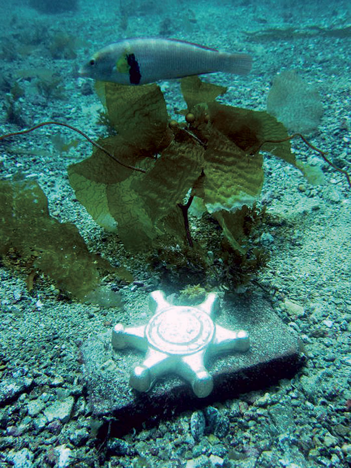 14th Annual Gold Star Dive Coming July 21