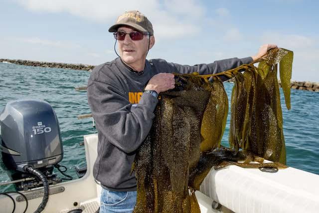 Kelp Watch 2014