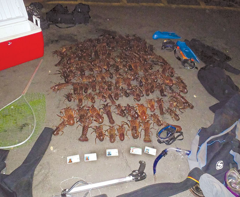 Suspected Poachers Nabbed with 132 Lobsters