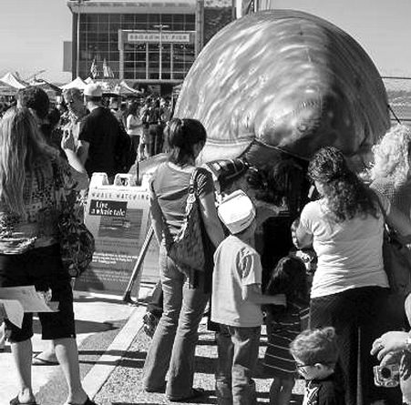 Big Bay Whale Festival comes to San Diego Jan. 25