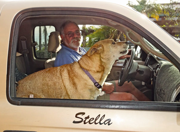 Stella, the jewel of Shelter Island: a not so shaggy dog story