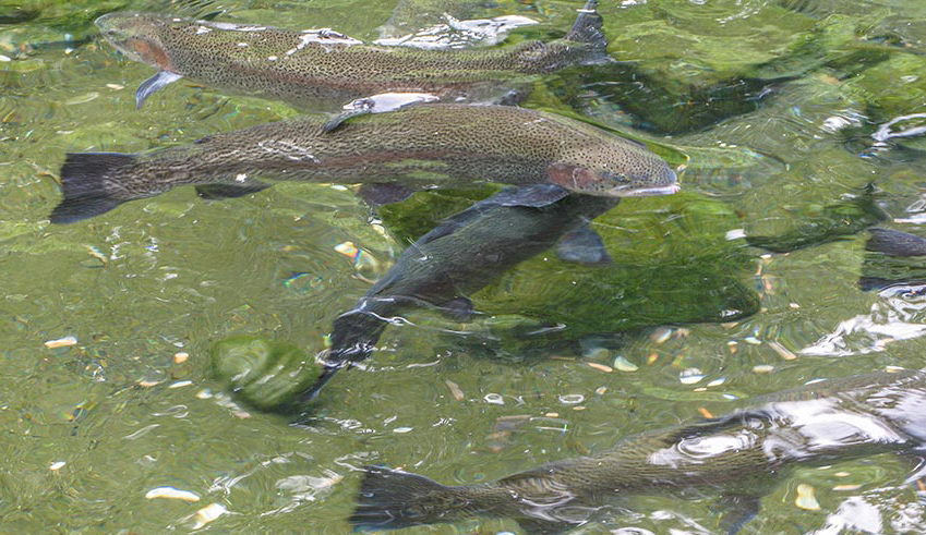 Appeals Court rules against Fish and Wildlife in stocking case