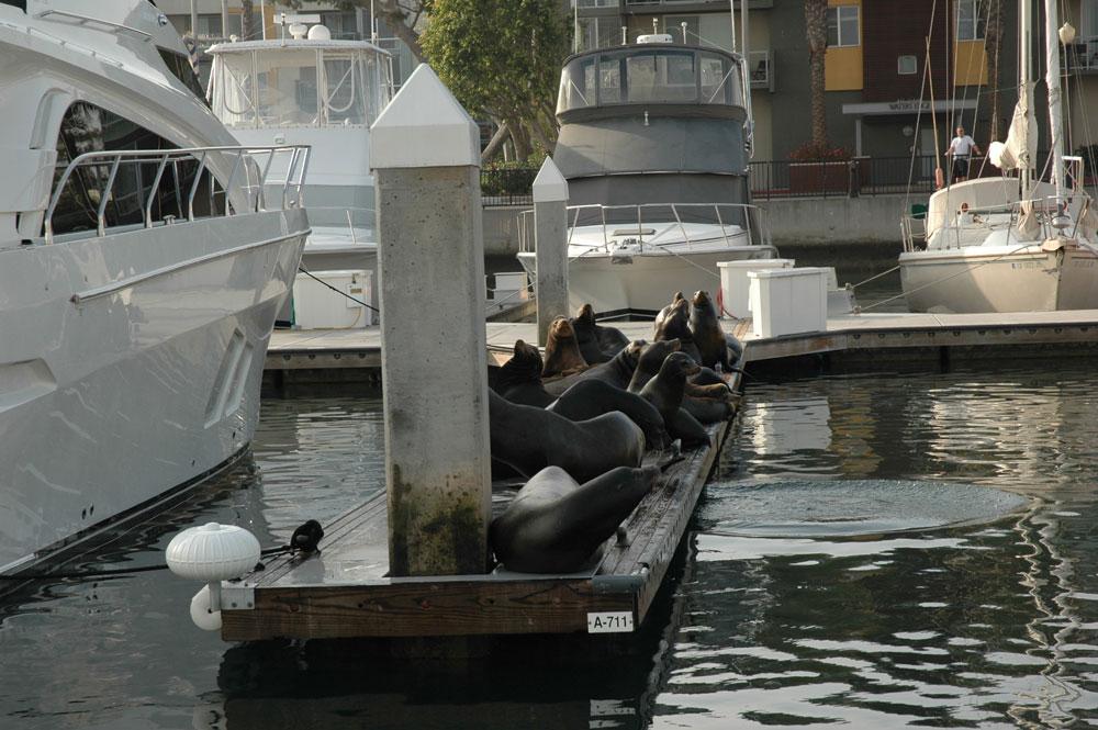 Sea lion pulls man off boat, pushes him underwater