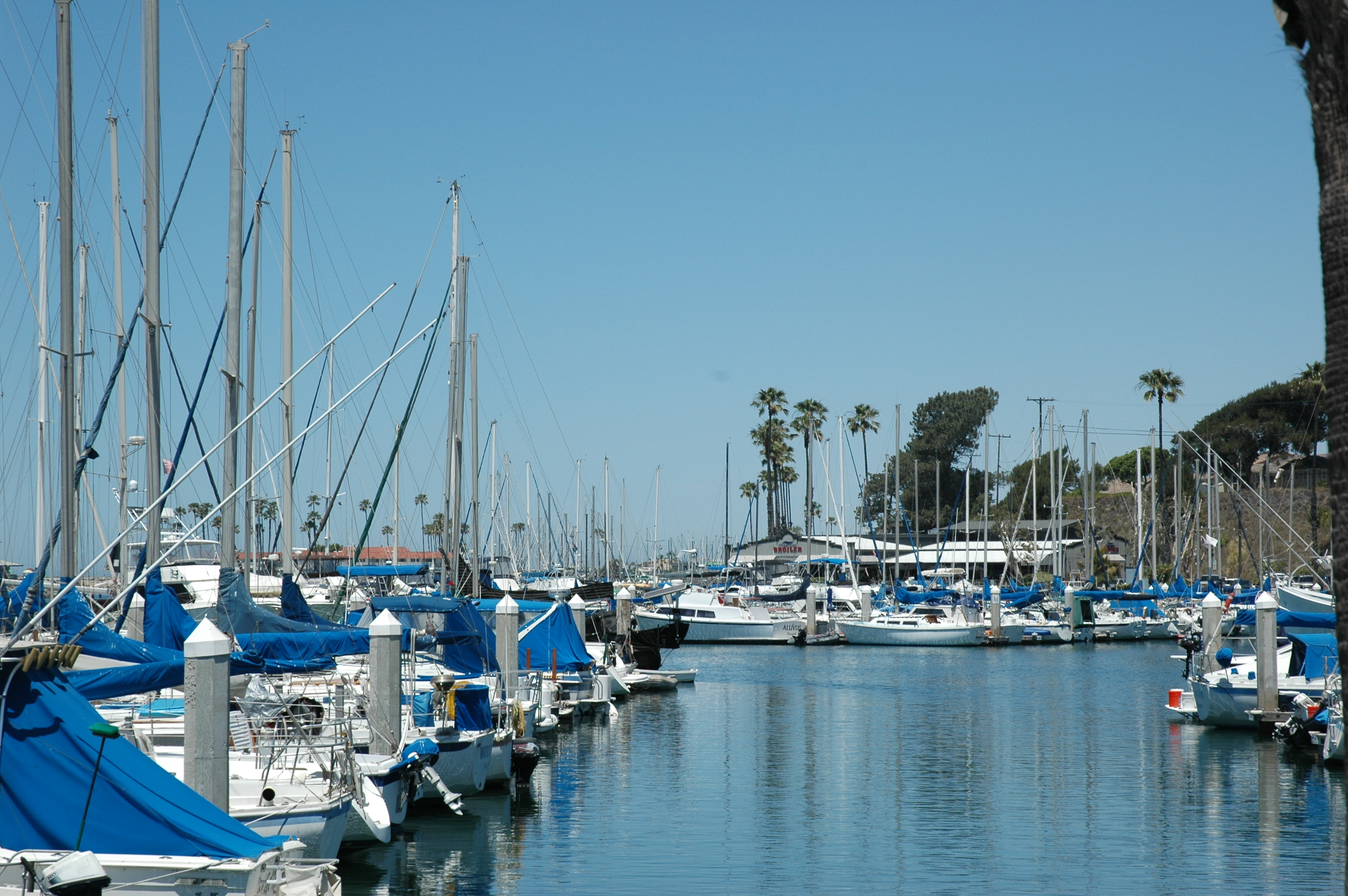 Oceanside Harbor weighs dye tablet viability