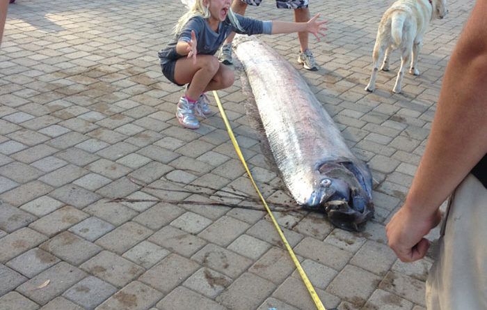 Another 'Sea Serpent' Found on Oceanside Beach