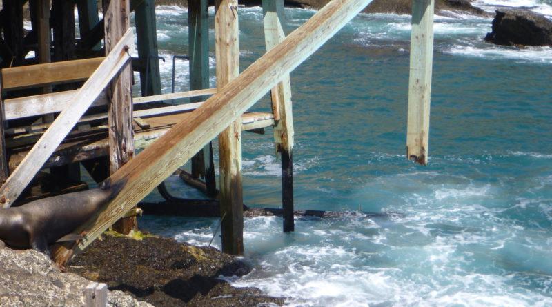 Santa Barbara Island reopens with interim repairs to landing dock