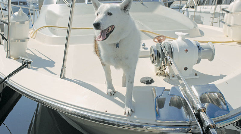 Woman Launches Museum of Maritime Pets