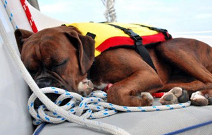 Catalina's Vet Helped Save a Sailing Dog's Life