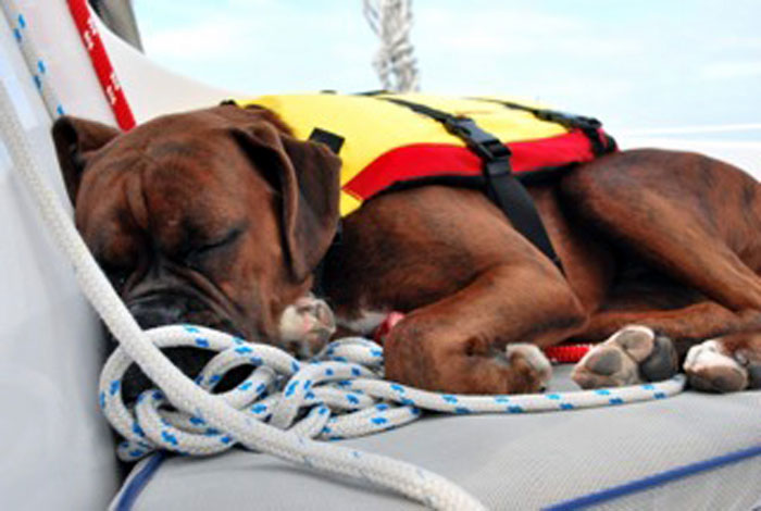 Catalina's Vet Helped Save a Sailing Dog's Life
