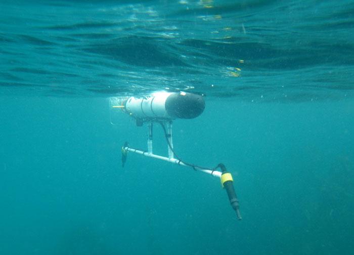 Robots Tail Catalina Sharks