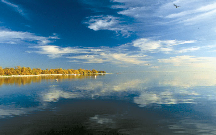 Dying Salton Sea: Source of Mysterious Foul Odor?
