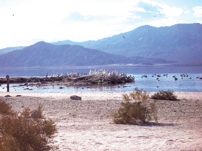 Accord Reached to Restore Salton Sea