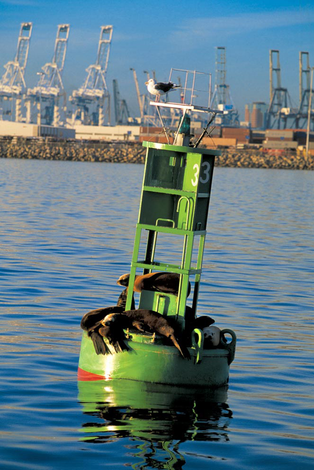 Port of Long Beach Lifts Fishing Restrictions