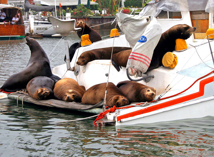 Boaters Seeing Fewer Sea Lions on Boats and Docks
