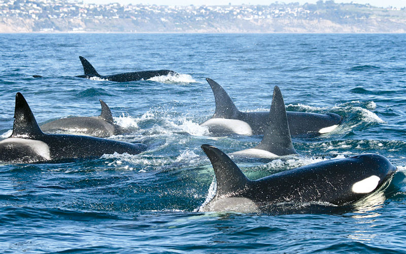Boaters Report Continued Whale Sightings All Over