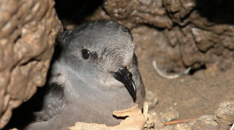 Catalina home to another rare species