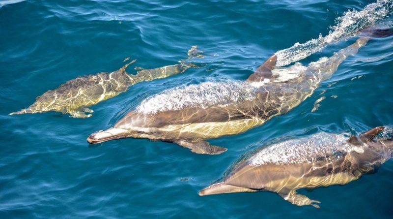 Cabrillo Marine Aquarium Hosts Whale Watching Trips