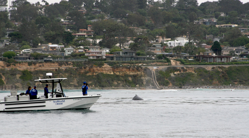 SD Coast Guard assists disentanglement of humpback whale