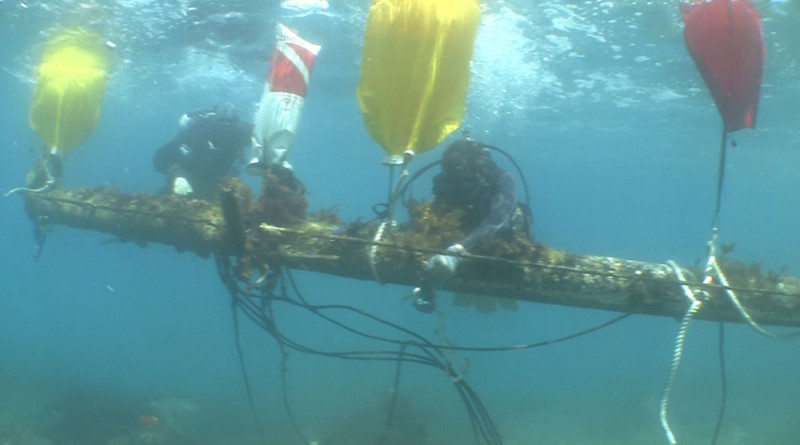 Ocean Defenders Alliance eradicates 48-foot mast