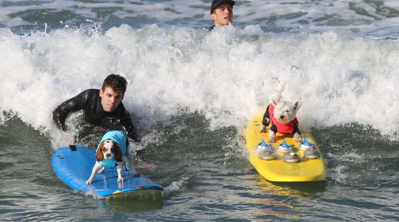 Dogs to hang 18 in Surf Dog Competition