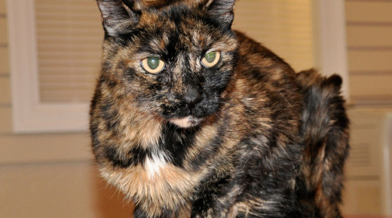 Cat found alive aboard sunken boat pulled from Lake Havasu