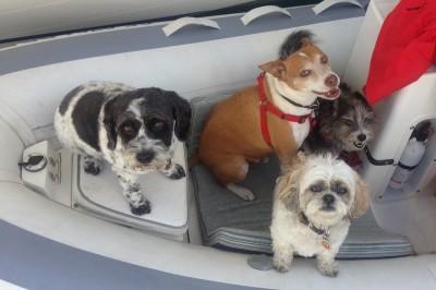 Dog Aboard: Teddy, Petey, Chewy and Lola