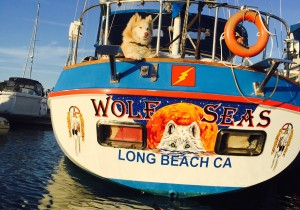 The Real 'Wolf' of the Seas