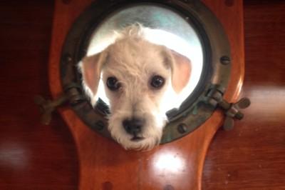Dog Aboard: Jiminy J