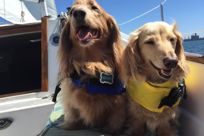 Dog Aboard: Ryan and Scout