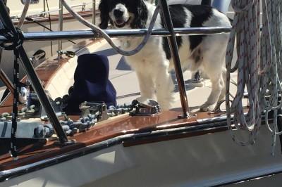 Dog Aboard: Sebastian