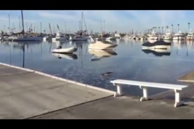 King Tides 2015 - Orange County