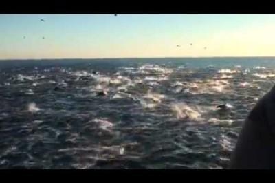 Dana Point Dolphin Stampede Dana Wharf