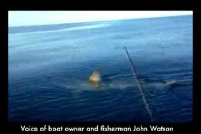Shark sidles up to fishing boat