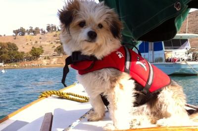 Dog Aboard: Marley