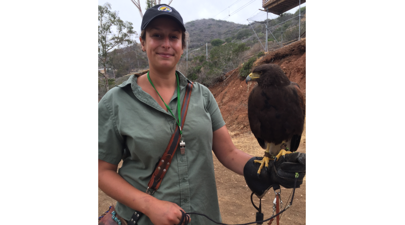The Catalina Falconry Experience is one of the island's newest activities.Parimal M. Rohit photo