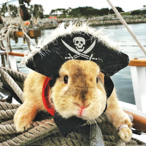 bunny as pirate