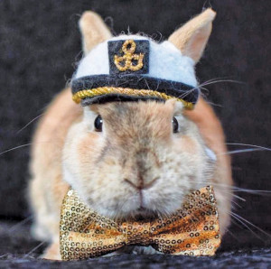 Captain Benny Bunny