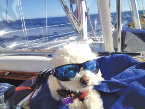 sailor dog sailing around Santa Barbara